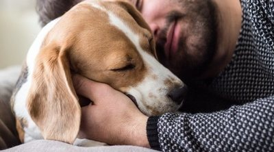 Cómo elegir a un perro: claves y consejos