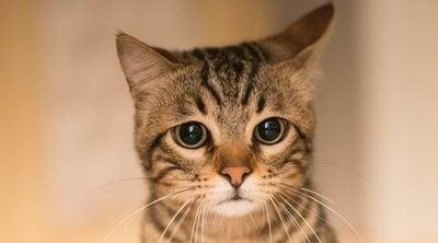 Psicólogo para gatos: todo lo que necesitas saber